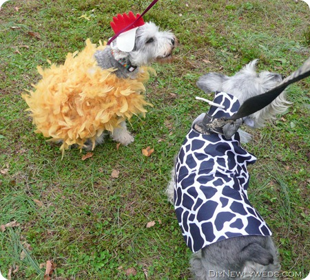 diy-halloween-costume-for-dogs