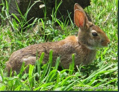bunny 0623 (1)