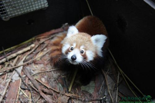 filhotes recem nascidos zoo zoologico desbaratinando animais lindos fofos  (10)