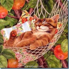kittens_wallpapers__32