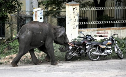 India Elephant Rampage 01