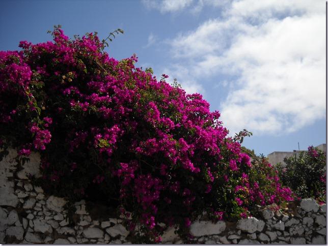 Lanzarote mare 874