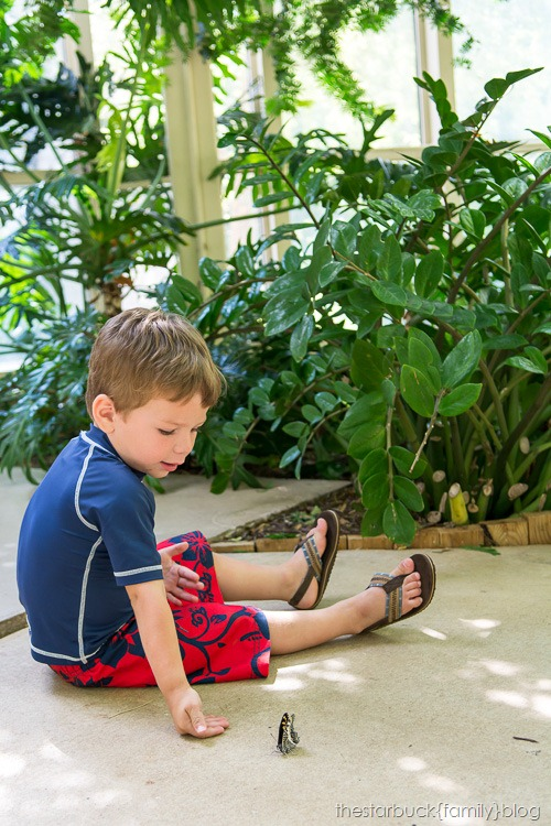Callaway Gardens butterfly garden blog-14