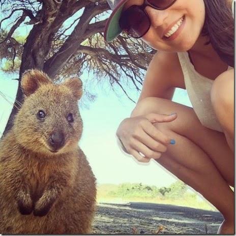 selfies-australian-quokka-002