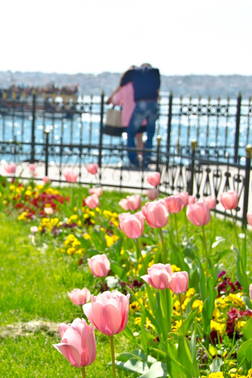 Pink tulips and a couple in Istanbul
