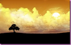 alone-tree-wallpapers_1124_1600x1200