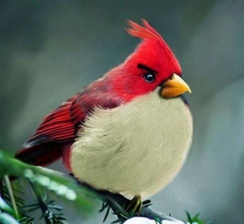 Real-Life-Angry-Birds-001
