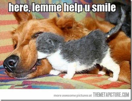 funny-kitten-playing-big-dog