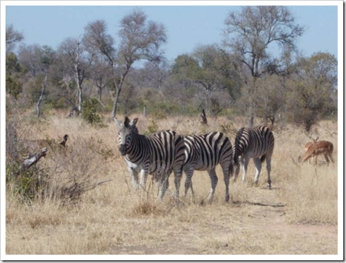Kruger National Park resize (166)