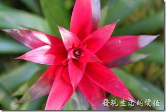 台南-2013台南公園百花祭71