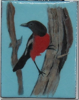 Crimson-Breasted-Bushshrike-2