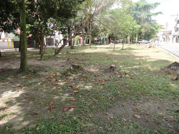 Arborização II