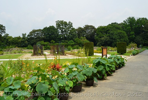 Glória Ishizaka -   Kyoto Botanical Garden 2012 - 62