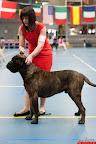20130511-BMCN-Bullmastiff-Championship-Clubmatch-1809.jpg