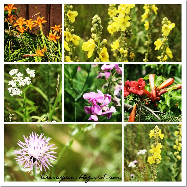 Wildflower collage