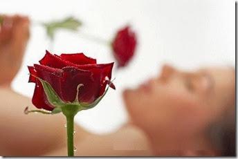 Rosas (5)