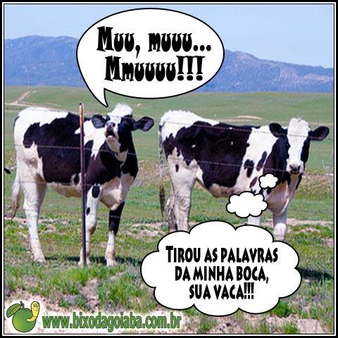 Você tirou as palavras da minha boca, sua vaca!