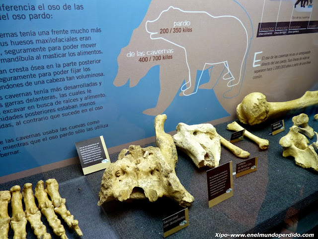 huesos-de-oso.JPG