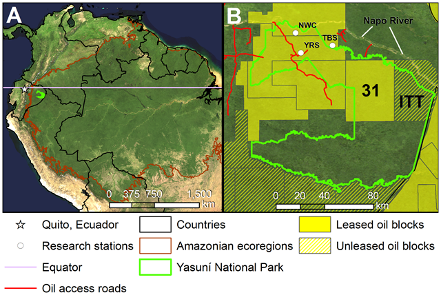 Ecuador's Yasuní National Park. A) Location of Yasuní National Park at the crossroads of the Amazon, Andes, and the Equator. B) Oil blocks and oil access roads within and surrounding the park. ITT = Ishpingo-Tambococha-Tiputini oil fields, NWC = Napo Wildlife Center, TBS = Tiputini Biodiversity Station, YRS = Yasuní Research Station. The image background is the Blue Marble mosaic of MODIS satellite images. Graphic: Bass, et al., 2010