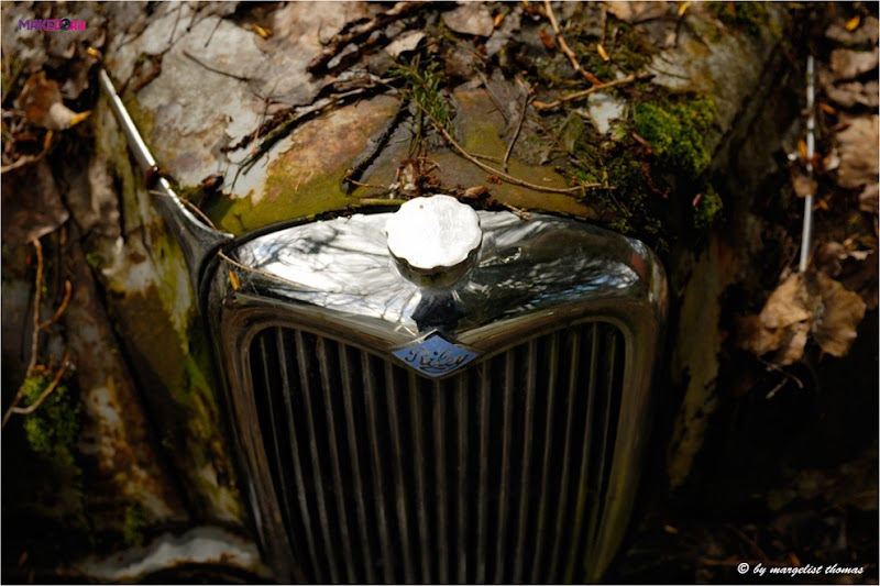 cars_017.jpg