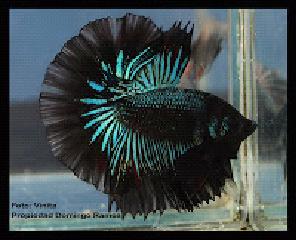 Todo sobre peces enfermedades comunes de agua fr a for Enfermedades de peces de agua fria