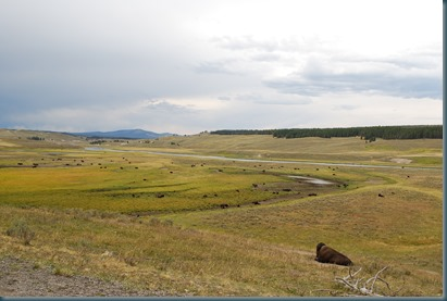 Yellowstone 085