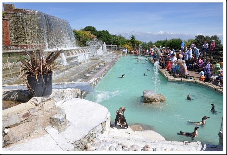Penguin Pool 5 July 2010
