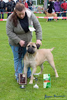 20100513-Bullmastiff-Clubmatch_31111.jpg