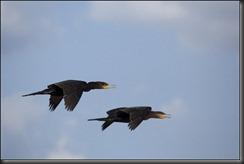 LL - birds in flight