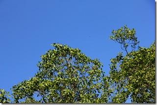 31-07-2011 Rio do Engenho 153