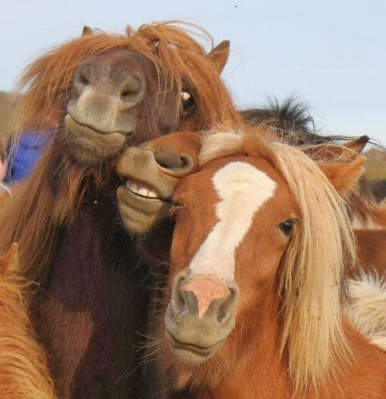 selfie-cavalos