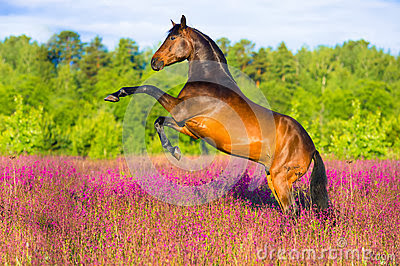 Bay horse rearing pink flowers 25304637