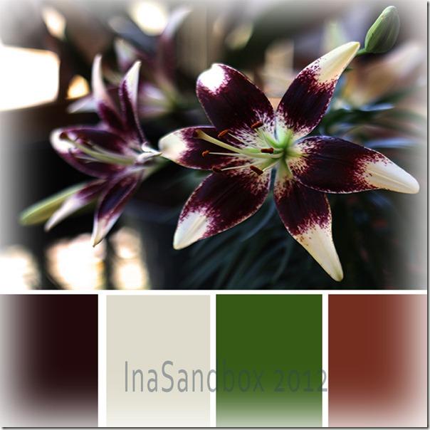 Patricia's Pride Asiatic Lily