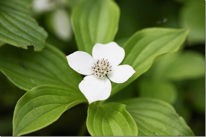 Garden May-21-blog