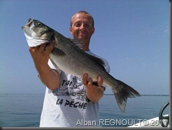 SMITH_dragonbait_sea bass_bar_1