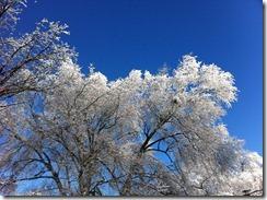 2012-12-26 White Christmas 12