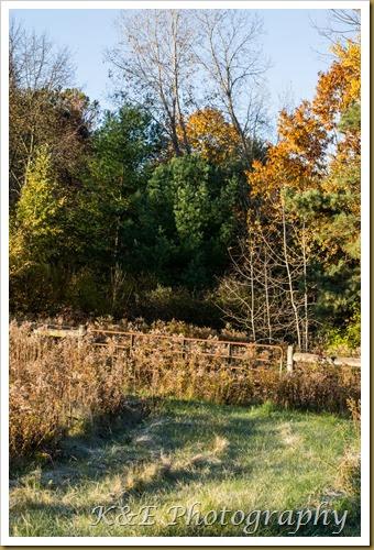 Fall 2013 November (15 of 30)