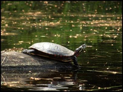 Lowell Lake #2 011 (5)
