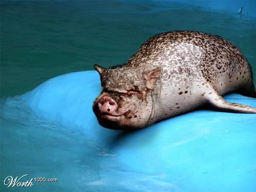 cerdo-foca.jpg
