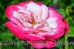 29   - Glória Ishizaka - Rosas do Jardim Botânico Nagai - Osaka