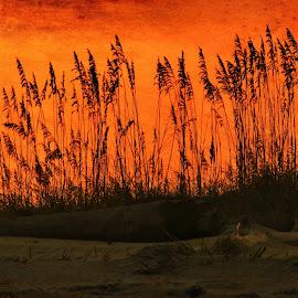 Ancient Amber by Jody Frankel - Landscapes Sunsets & Sunrises