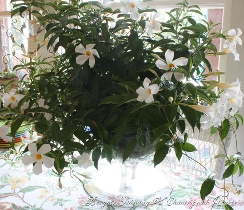 [flowers6.jpg]