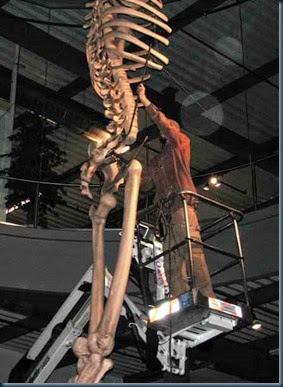 gigante-de-sete-metros