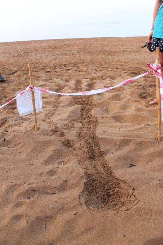 Βγήκαν τα πρώτα χελωνάκια στην Κεφαλονιά