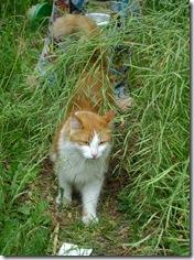 orig cat8158