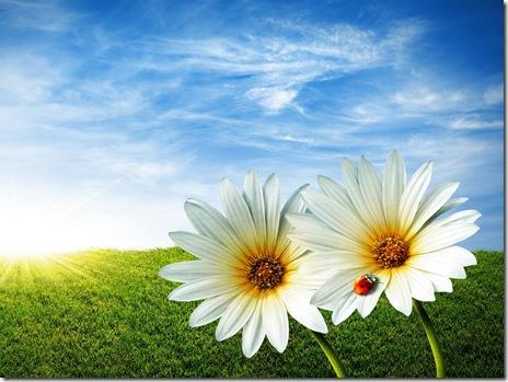 poze macro-flori