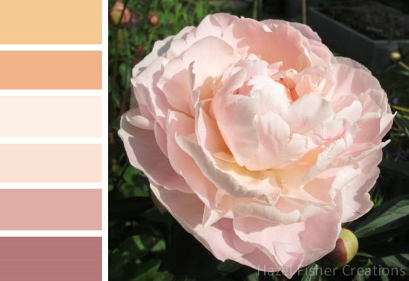 019 colour palette pink peony