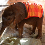 Kauro, Sheldrick Wildlife Trust © Foto: Susanne Schlesinger | Outback Africa Erlebnisreisen