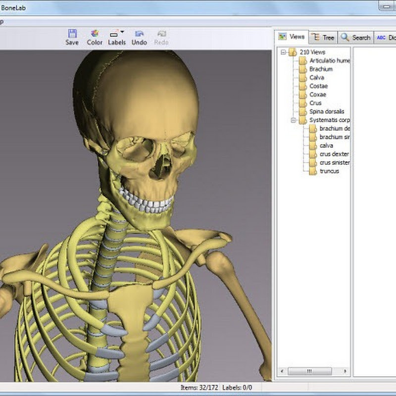 Free Interactive 3D Human Anatomy Software