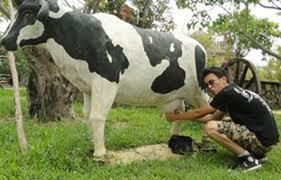 Thu phí tham quan Yên Tử: Di tích không phải là bò sữa